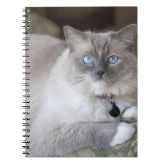 Gato femenino de Ragdoll Spiral Notebook