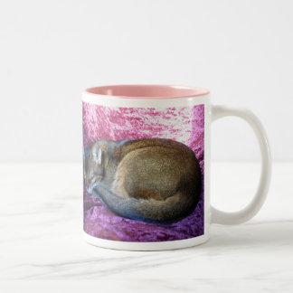 Gato femenino rubicundo abisinio que lo toma fácil taza de café