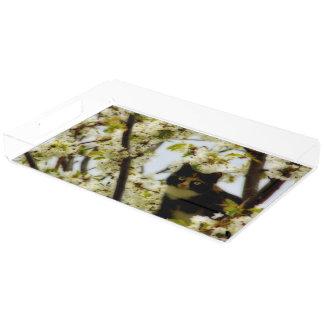 Gato floreciente bandeja rectangular