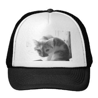 Gato/foto blancos del negro y del blanco gorro