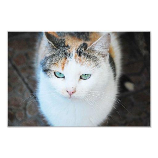 Gato Fotografía