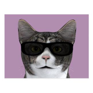 Gato fresco con las lentes de sol negros tarjetas postales