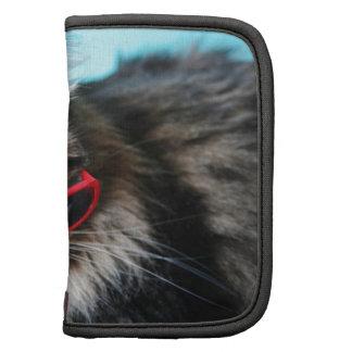 Gato fresco con los vidrios rojos organizador