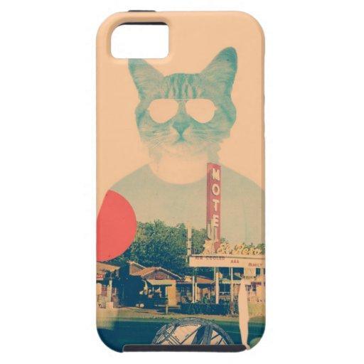 Gato fresco iPhone 5 cobertura