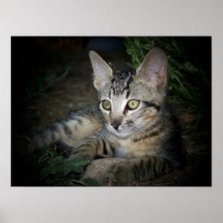 Gato fresco poster