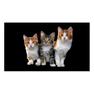 Gato fuera de la tarjeta de visita de la caja