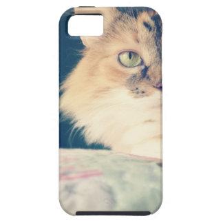 gato iPhone 5 carcasa