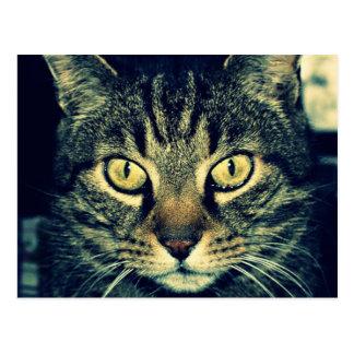 Gato glaring gris postales