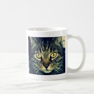 Gato glaring gris taza