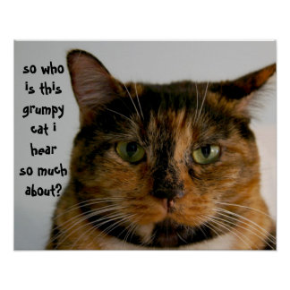 Gato gordo con actitud, poster divertido del gato