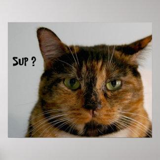 ¿Gato gordo con actitud SORBO poster divertido d