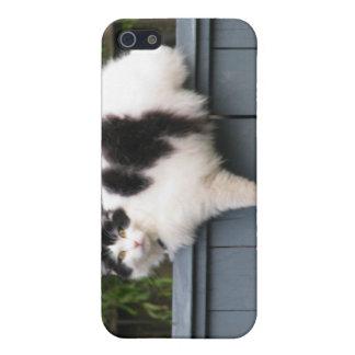 Gato gordo en la cerca iPhone 5 cobertura