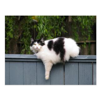 Gato gordo en la cerca postales