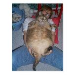 Gato gordo feo postal