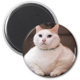 Gato gordo imán redondo 5 cm