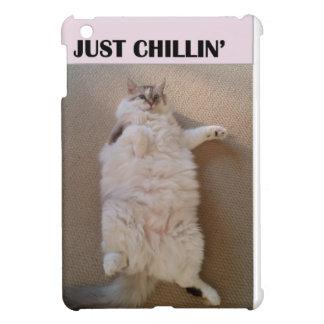 Gato gordo que se relaja