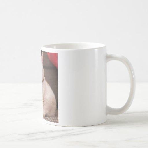 Gato gordo tazas de café
