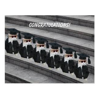 Gato graduado divertido postales