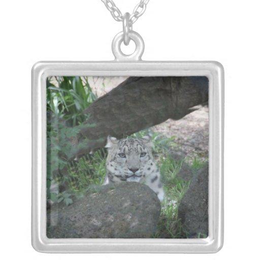 Gato grande collares personalizados