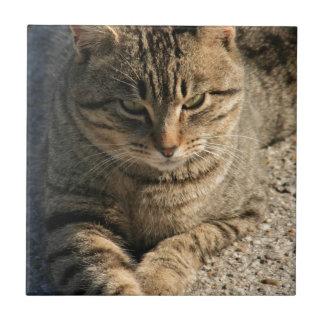 Gato grande de Tom del Tabby del muchacho Azulejo Ceramica