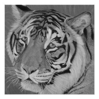 gato grande del tigre con arte triste de la fauna