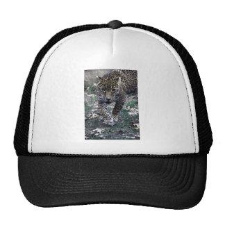 gato grande gorra