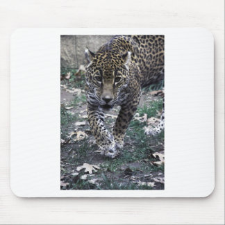 gato grande mouse pads