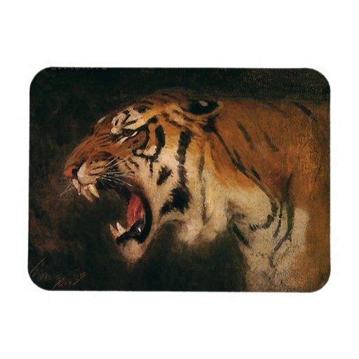 Gato grande que ruge, animal salvaje del tigre de imanes