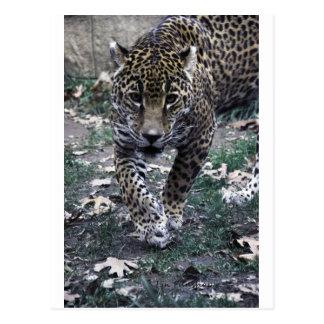 gato grande tarjeta postal