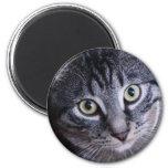 Gato gris adorable imán de frigorifico