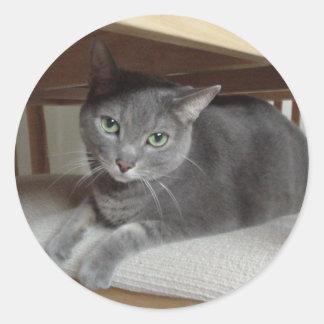 Gato gris/azul ruso etiquetas redondas