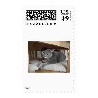 Gato gris/azul ruso sellos
