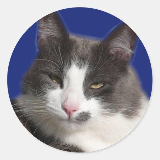 Gato gris blanco de Casey Pegatina Redonda