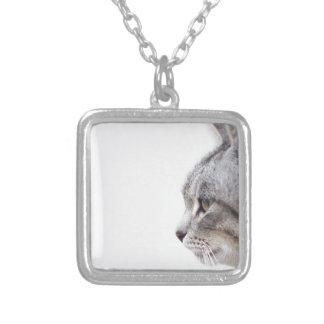 Gato gris colgante cuadrado