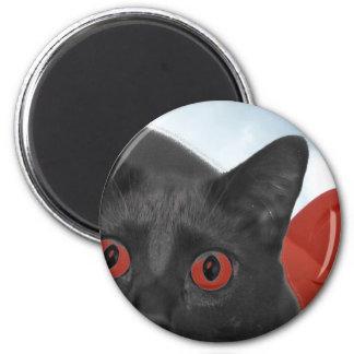 Gato gris con la imagen mezclada ojos del naranja iman