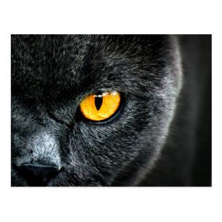 Gato gris con los ojos anaranjados tarjeta postal