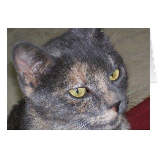 Gato gris con los ojos verdes tarjetón