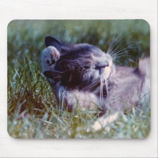Gato gris de Grazzin que se lava cojín de ratón Tapetes De Ratón
