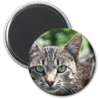 Gato gris de la raya con los ojos verdes imán para frigorifico