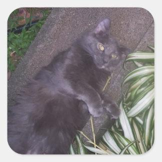 Gato gris de Tortie Pegatina Cuadrada