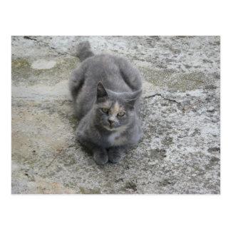 Gato gris del gatito tarjeta postal