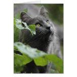 Gato gris en el jardín felicitación