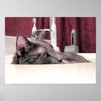 Gato gris en fregadero posters