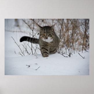 Gato gris lindo en nieve impresiones