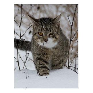Gato gris lindo en nieve postal