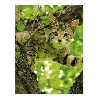 Gato gris lindo en un árbol postales