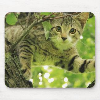 Gato gris lindo en un árbol tapetes de ratón