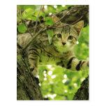 Gato gris lindo en un árbol tarjeta postal