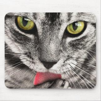 Gato gris lindo que lame la pata alfombrillas de raton