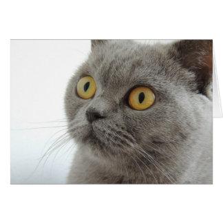 Gato gris lindo tarjeta de felicitación